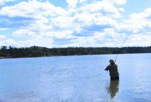 Show low lake campground fishing boating for White mountain fishing report
